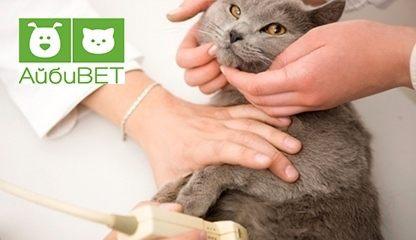 Кастрировать кота витебск