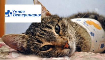 Парикмахеры для кошек минск частные объявления продается дубленка частные объявления