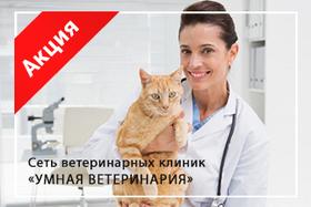 Акция «Кастрация котов и стерилизация кошек + стрижка когтей в подарок»
