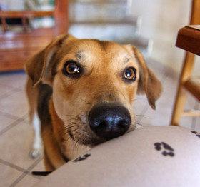 Как отучить собаку попрошайничать?