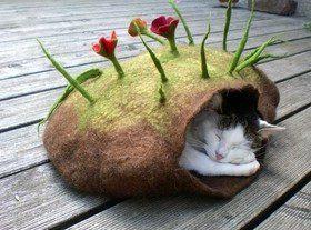 Кошкин дом: выбираем место для сна