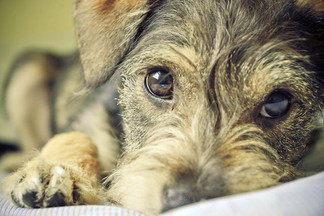 ТПЛО — лучший метод лечения разрыва передней крестообразной связки у собак
