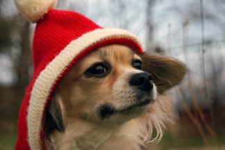 5 причин не пренебрегать шапкой в холода