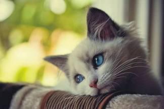Прощайте, котики! Основные признаки аллергии на шерсть животных у детей