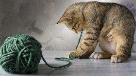 Кошка играет: как и зачем?