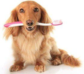 Здоровье зубов у собак