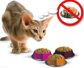 Питание кошек: можно и нельзя