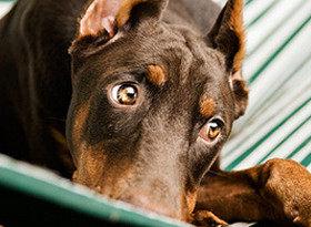 Бешенство у животных: симптомы и признаки