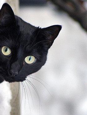7 самых интересных фактов о кошках