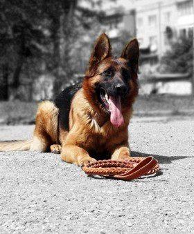 Обучаем собаку: команда «место»