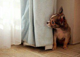 Собака и... салют: как уберечь питомца