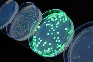 Находить раковые клетки станет проще: ноу-хау сибирских и канадских ученых