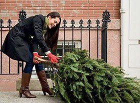 Как выбрать здоровую новогоднюю елку