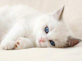 Глухие кошки