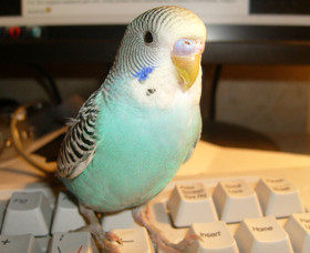 Птица в доме: выбираем украшение и друга
