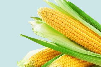 «ГМО не вреднее, чем химические добавки». Разговор c генетиком о том, что мы едим
