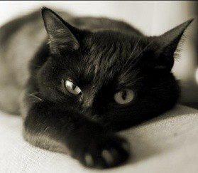 Любовь к кошке по правилам кошки