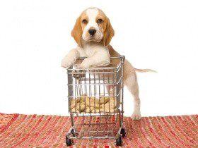 Обед по расписанию: рацион для щенка