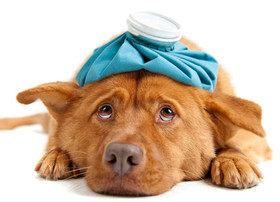 Как дать собаке лекарство?