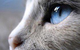 Каким видят мир кошки?
