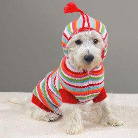 Одежда для собак: блажь или необходимость?