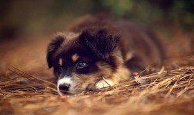 Отравление у собак