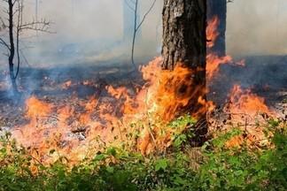Введен запрет на посещение лесов в 16 районах Беларуси