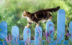 Прогулка с кошкой: зачем, как, когда?