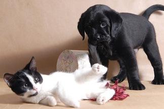 От домашних животных можно заразиться глистами! Врач о том, как этого не допустить