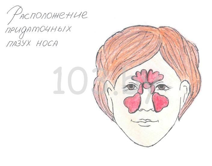 расположение придаточных пазух носа.jpg