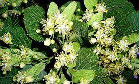 0a1ceaef0a7b99c4a6aec7b43aca02ae.jpg